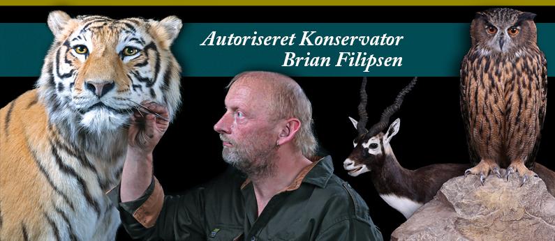 konservator dyr sjælland
